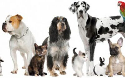 Properties for Pets – We seek your opinion